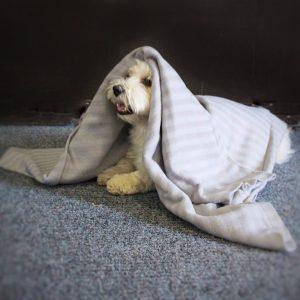 Rohkeutta ja Reippautta! – kurssi koiran itsevarmuuden kohottamiseen to 11.11., 18.11. ja 25.11. klo 19:30-20:30