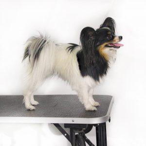 Koiranäyttelykurssi pennuille ti 26.10., 2.11. ja 9.11. klo 19:20-20:20