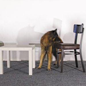 Noseworkin jatkotunti: sisätilaetsintä kokeneemmille koirakoille torstaina 28.10. klo 17-18
